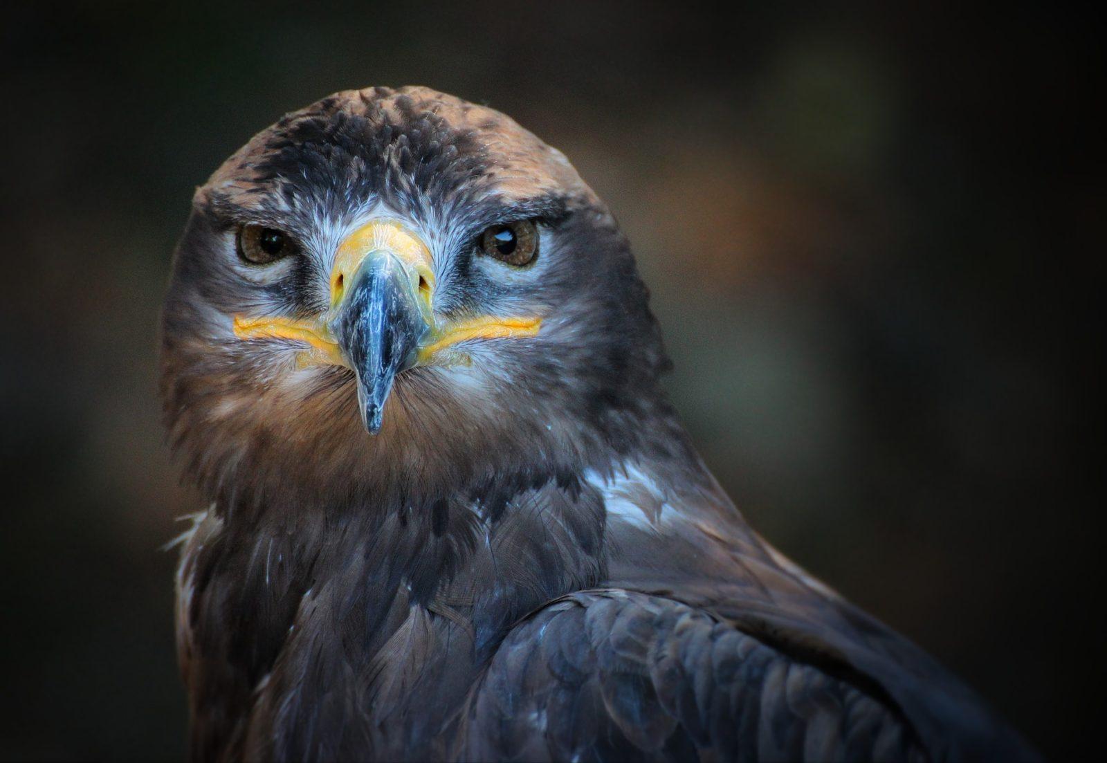 Bird wild predator